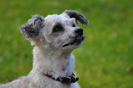 Huxley Hound Dog Treats Dragons Den