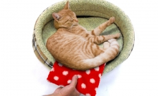 Go Dotty for Petlife's New Thermal Heat Pad Design