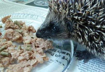 Verm-X Boost for Hedgehog Helpline Charity