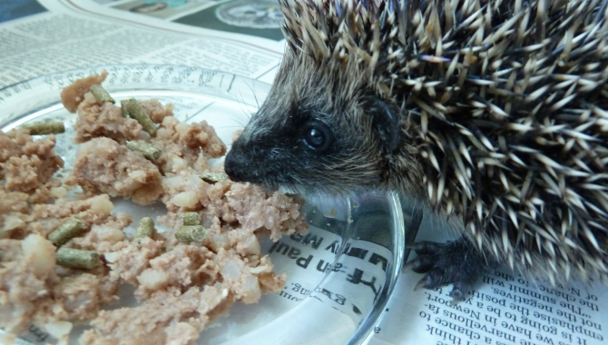 Verm-X Boost for Hedgehog Helpline Charity