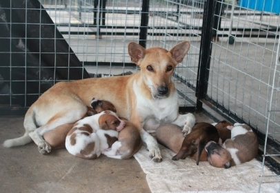 Borneo Street Dog Project Appeals For Urgent Funding to Avoid Closure