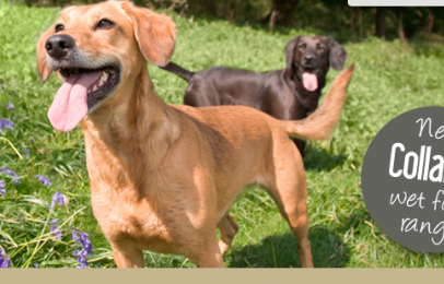 Collards Pet Food Introduce 2 NEW Wet Tray Varieties For Dogs