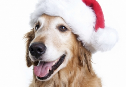 5.5 Million Dogs In UK To Share Christmas Dinners This Year,  Despite Scary Health Implications