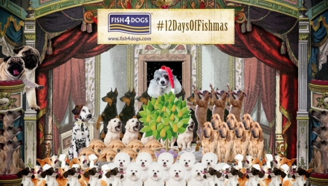 Love dogs? Love Xmas? Fish4Dogs Has Something For You, With Its New Video Marketing Campaign