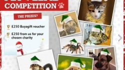 Buyagift.com's 'Pet Elfie' Competition Winner Revealed