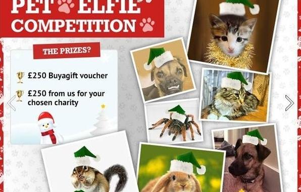 Buyagift.com's 'Pet Elfie' Competition Winner Revealed