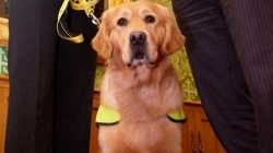 Benefits of Pets to Older People Celebrated at House of Lords