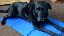 New Cooling Mat from Easidri is snapped up at Crufts
