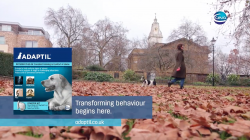 New Adaptil® TV Ad With a Focus on Dog Behaviour Launches in Run Up to Crufts