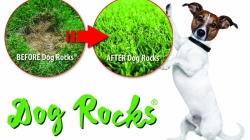 Dogs Rocks Launches Bulk Bags