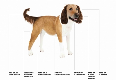 What are the Nation's Ideal Dog Traits?