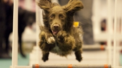 The London Pet Show moves to ExCeL London