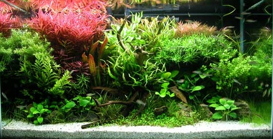 Tetra Release An Updated Comprehensive Aquatic Plant Care Range