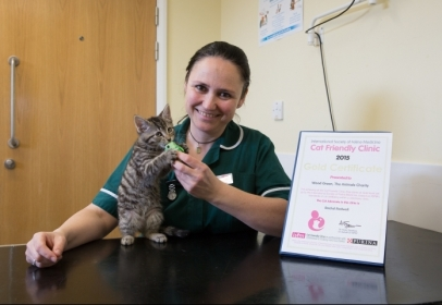 Wood Green The Animals Charity Awarded Cat Friendly Clinic Status