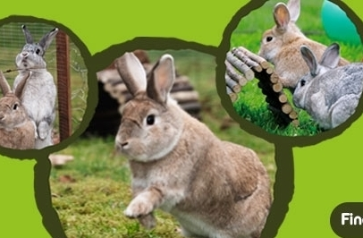 Free Rabbit Health Checks in May For Rabbit Awareness Week