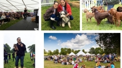 Success for DogFest in Cheshire