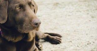 dog-569026