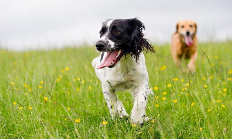 Mintel Report, Pets