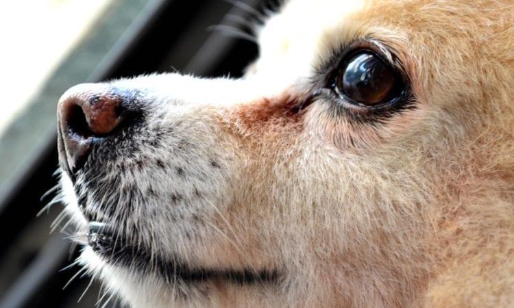 cute, dog, looking